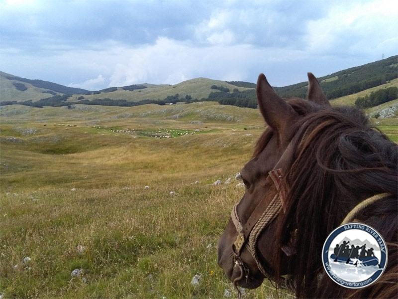 Jahanje konja Tara
