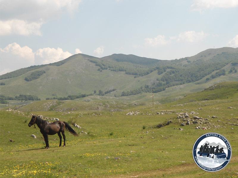 Jahanje konji izlet